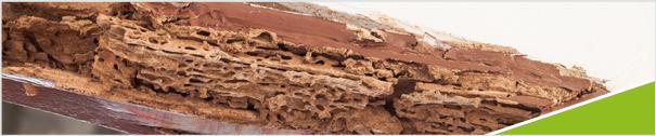 le diagnostic termites une prestation conditionn e par la localisation de votre bien adi. Black Bedroom Furniture Sets. Home Design Ideas